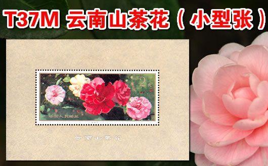 """""""T37M 云南山茶花(小型张)""""。原胶全品,欢迎购买!"""