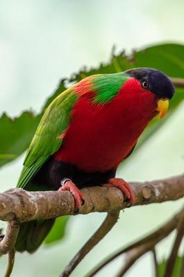 皮特凯恩群岛,斐济,纽埃发行太平洋鸟类长方形彩银组