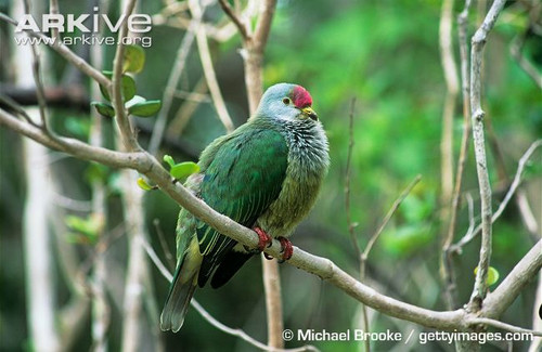 皮特凯恩群岛,斐济,纽埃发行太平洋鸟类长方形彩银组币