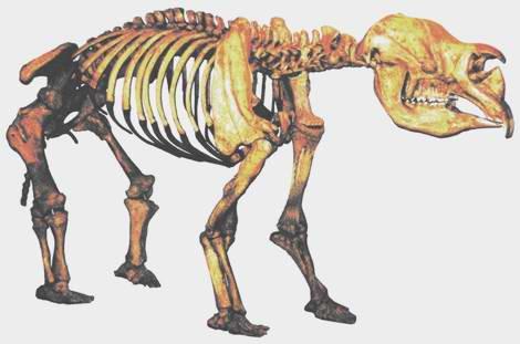 史前动物骨骼标本