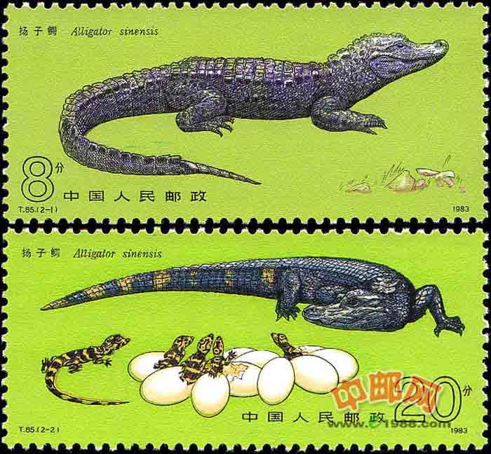 扬子鳄主要分布在中国长江中下游的安徽