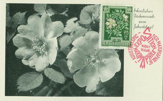 片 花卉 欧洲野蔷薇 附捐邮票