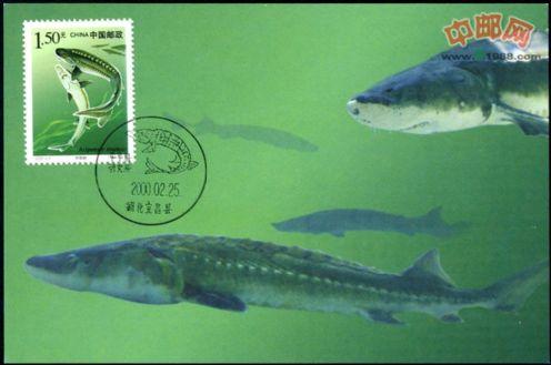 2000-3《国家重点保护野生动物(Ⅰ级)(一)》