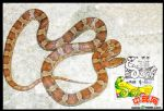 AMF051 澳门2013年蛇年电子邮票极限明信片.片图为莽蛇,片贴电子票一枚.盖生肖蛇图邮戳。戳清晰
