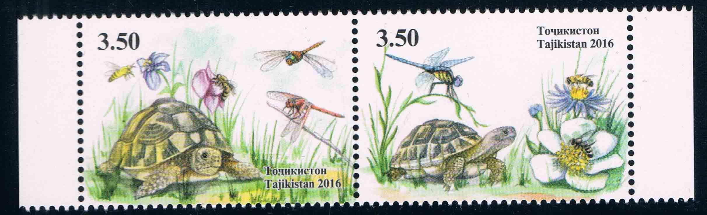 塔吉克斯坦2016龟类动物蜻蜓(大图展示)